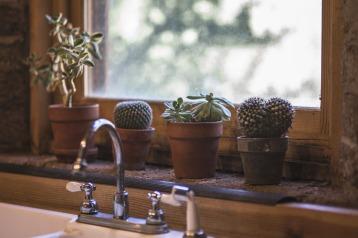 cactus-2556000_1280
